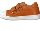 Lunella  orange